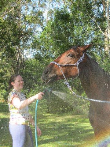 Horse Care Australian Horse Riding Kerewong Farmstay Port Macquarie Hinterland