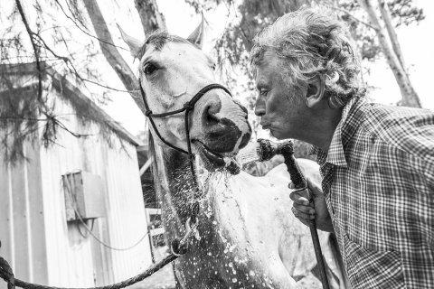 Washing Horses After Day Ride On Horse Trekking Holiday NSW Australia