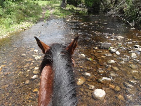 Creek Crossing Horse Rider View NSW Hinterland Australia