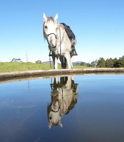 Arabian Horse Adventure Tours Australia