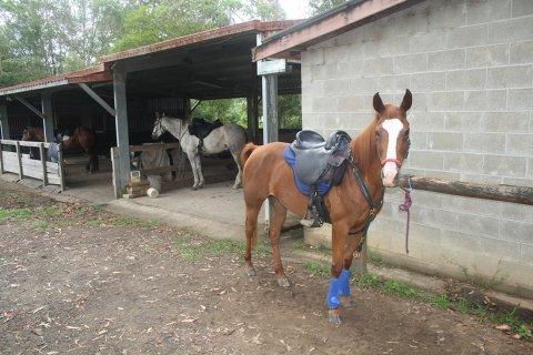 Horses Ready To Ride For Holiday Treks Australia