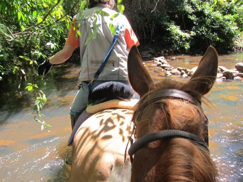 Horse Riding Treks Adventure Holiday Tours North Coast NSW Australia