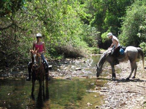 Horse Riding Adventure Tours Horse Treks Australia NSW Mid North Coast