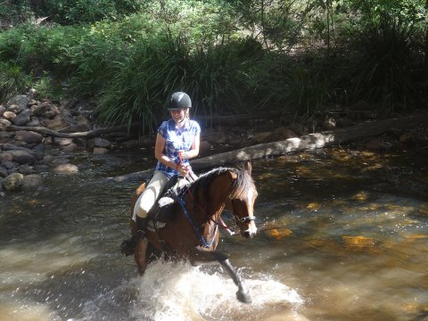 Horse Riding Fun Creek Crossing NSW Horse Tours Australia