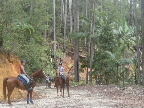 Horse Riding Holiday Tours For Experienced Riders Australia NSW Port Macquarie Hinterland