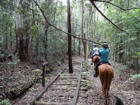 Horse Ride Along Australian Historic Timber Railway Line NSW Mid North Coast