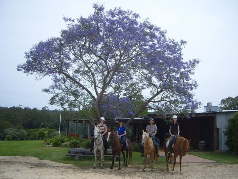 Horse Riding Winery Ride Bago Cellar Door Port Macquarie Hinterland NSW Australia