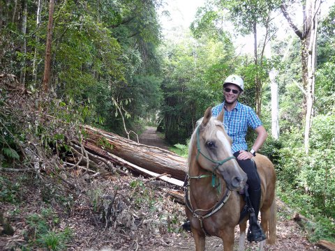 Horse Trail Riding Australian Bush NSW North Coast North of Sydney Australia