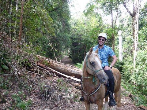 Horse Trail Riding Australian Bush NSW North Coast North of Sydney Australia