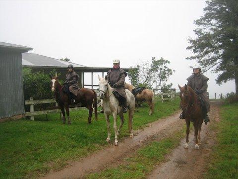Misty Horse Riding Day At Comboyne Plateau NSW Australia