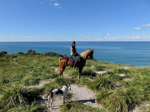 Australian Horse Tours NSW Australia