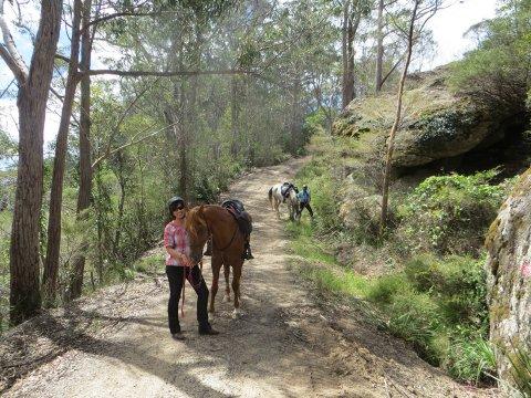 Comboyne Mountain Decent Horse Treks Australia NSW Adventure Tours