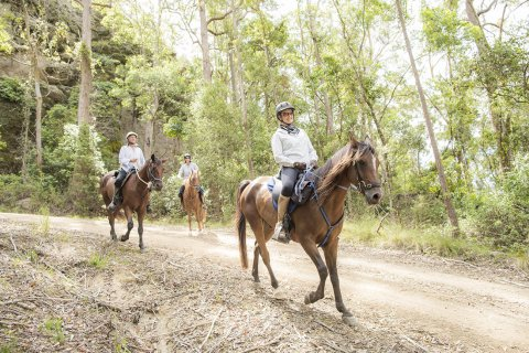 Horse Riding Downhill Trails Horse Treks Australia NSW Adventure Tours