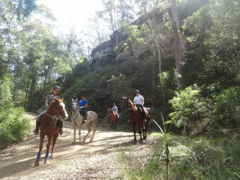 Mountain Horse Treks Australia Intermediate Riders NSW Sydney North Coast