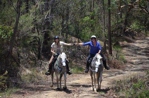 Comboyne Mountain Horse Treks Australia NSW Adventure Tours
