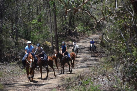 Comboyne Mountain Horse Treks Australia NSW Adventure Tours