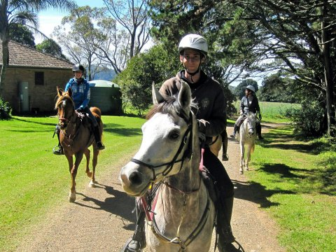 Horse Riding On Comboyne Plateau On A Sunny Winter Day, Port Macquarie Hinterland NSW Australia