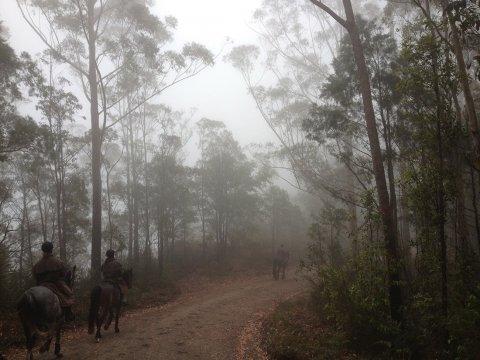 Misty Australian Forest Trails NSW Horse Riding Australia