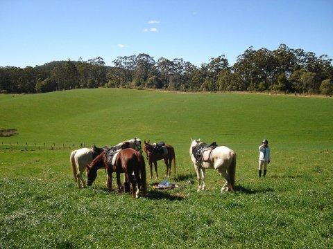 Resting Horses - Comboyne Plateau, Port Macquarie Hinterland Comboyne NSW Australia