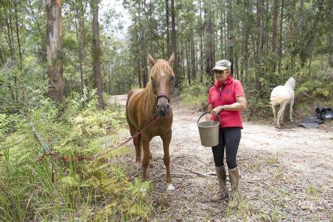 Well Cared For Endurance Trail Horses - Southern Cross Horse Treks Australia