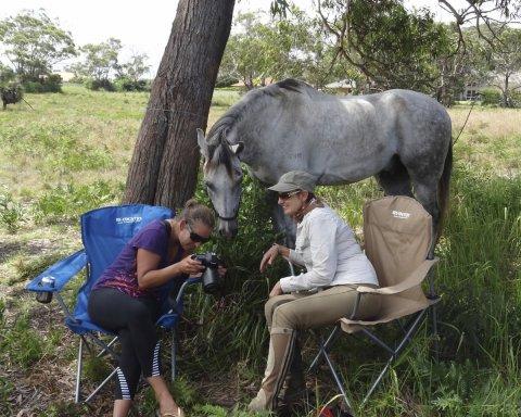 Horse Treks Australia Adventure Tour Horseriding Holidays NSW Australia