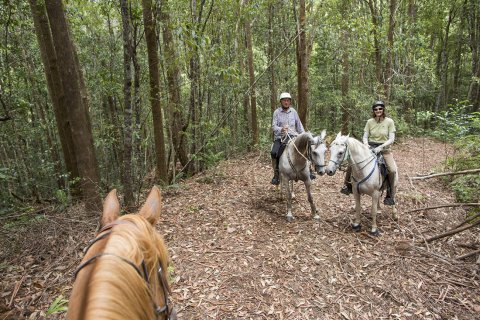 Horse Riding On Quiet Australian Bush Trails Kerewong State Forest