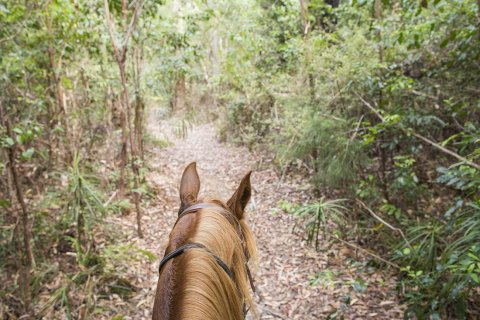 Discover Great Trails Horseriding Adventure Holidays NSW Australia