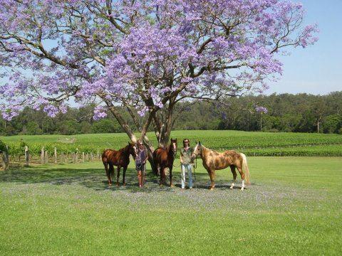 Horse Riding Tours With Southern Cross Horse Treks To Bago Vineyards NSW Australia