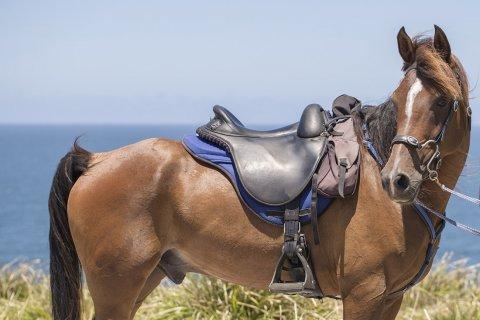 Horse Trekking Comfortable Australian Endurance Saddles - Southern Cross Horse Treks NSW Australia