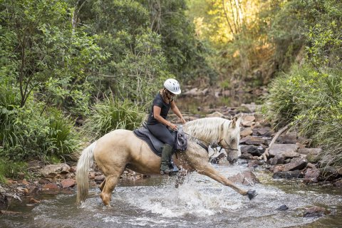 Palomino Part - Arabian Horse - Creek Crossing Horseback Riding Tours NSW Australia