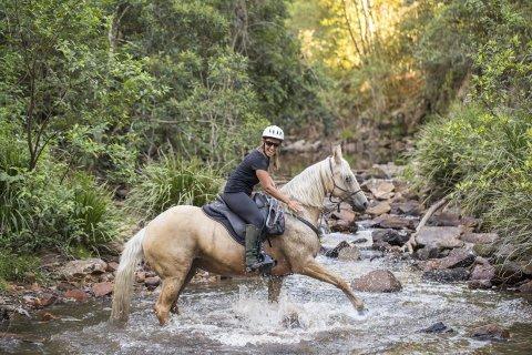 Palomino Mare - Creek Crossing Horseback Riding Tours NSW Australia