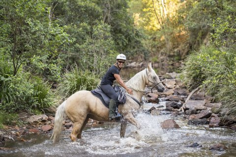 Finesse (Ness) - Creek Crossing Horseback Riding Tours NSW Australia
