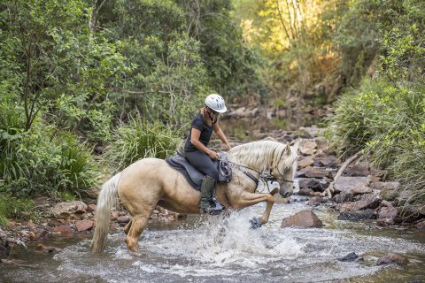 Ness - Creek Crossing Horseback Riding Tours NSW Australia