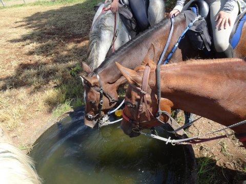 Well Cared For Endurance Horses Adventure Trailriding Holidays Australia