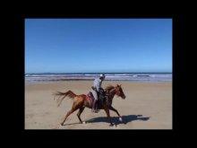 Australian Horse Trek Tour