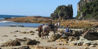 Horse Riding Port Macquarie Beaches NSW - Horse Treks Australia