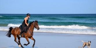 Beach Horse Riding Australia NSW