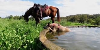 Australian Horse Trekking Adventures