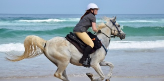 Arabian Horse Beach Riding