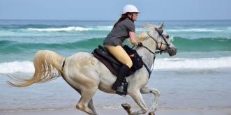 Arabian Horse Beach Riding