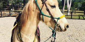 Guy Fawkes Heritage Horse Horse Trekking Holiday Australia