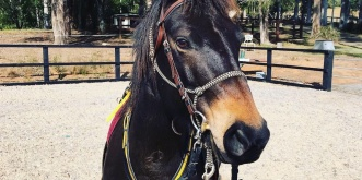 Australian Brumby Horse Riding Holiday Australia