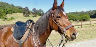 Australian Horse Riding Tours NSW Holidays