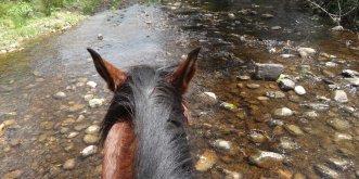 Creek Crossing Horse Rider View NSW Hinterland Australia