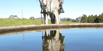 Arabian Horse Adventure Tours Australia