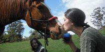 Friendly Horses on Horseriding Holiday NSW