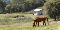 Studio Cabin Horse Riding Farm Holiday Australia NSW