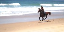 Aliya - Horse Riding Beaches NSW - Port Macquarie Region Horse Treks Australia