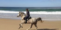 Arabian Horse Jimmy Canters On Australian NSW Beach - Southern Cross Horse Treks Australia