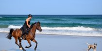 Beach Horse Riding Australia NSW